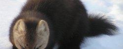 Астраханский Заповедник Виды Животных Подлежащих Охране